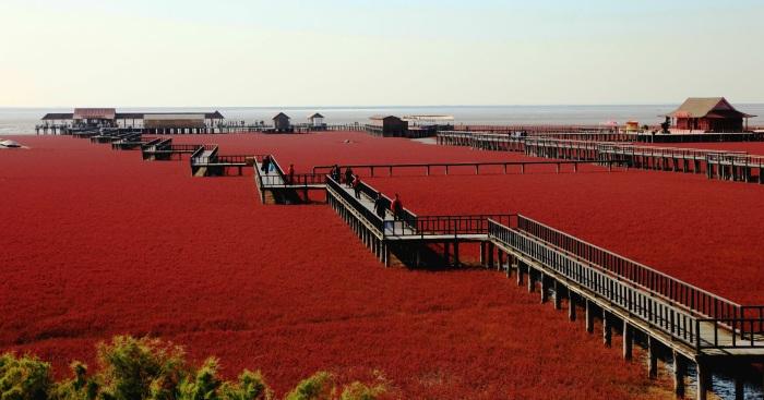 哈尔滨秋季盘锦红海滩,让人惊叹的景致。