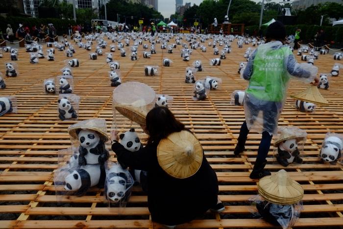 由于雨天的缘故,纸熊猫都穿上了特制雨衣。