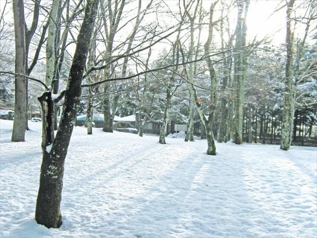 冬季的轻井泽,被大雪渲染成一个白色童话王国。