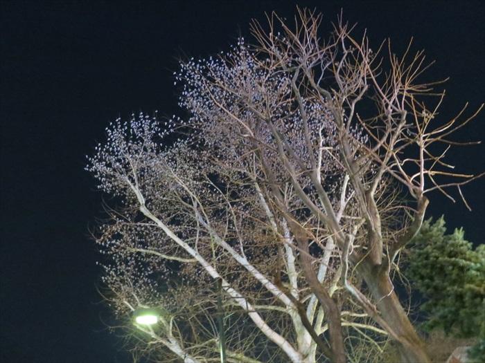 冬天的夜晚,书上的是花朵?错!那是一群不怕冷风吹的小鸟!