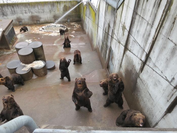 旅途上的动物 北海道●熊