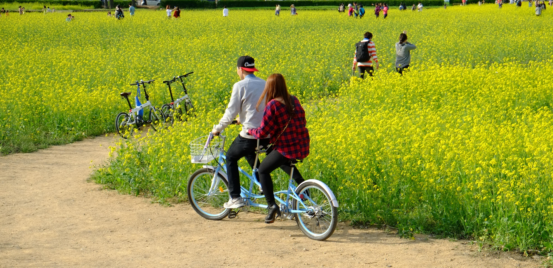 游览庆洲最理想的方式就是骑单车悠游。