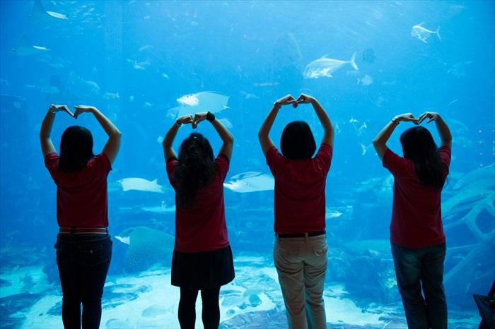 向海洋致敬、向海洋说爱!