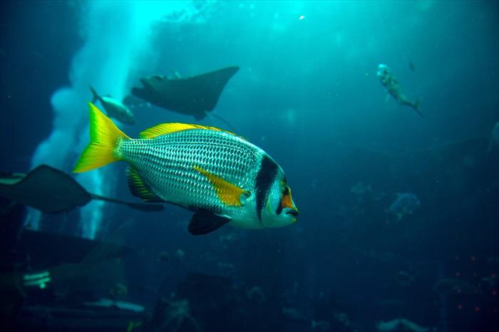 和鱼儿遨游失落的亚特兰蒂斯!