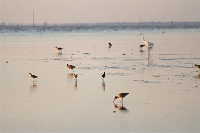 在沼泽地上的海鸟们。