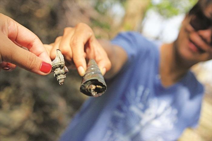 前面的就是峇里冬,后面体型较大的就是寄居蟹,都是红树林的特产物。