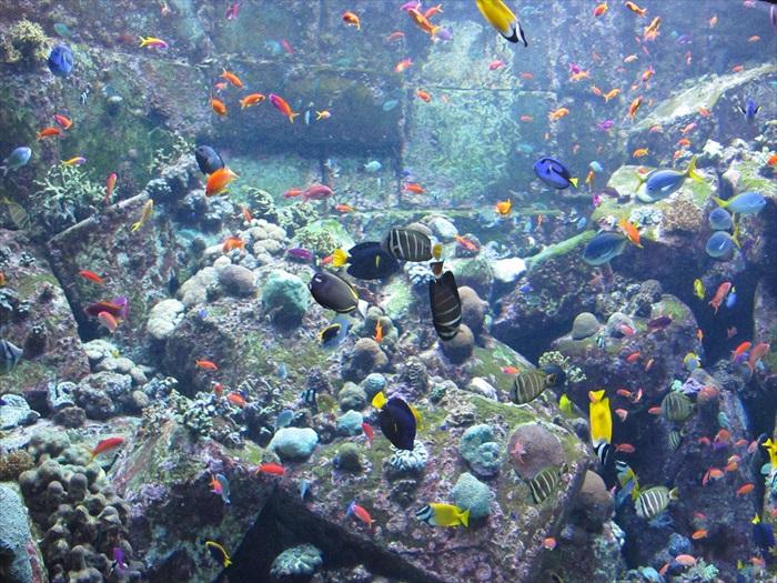 多达65,000种海洋生物被蓄养其中。
