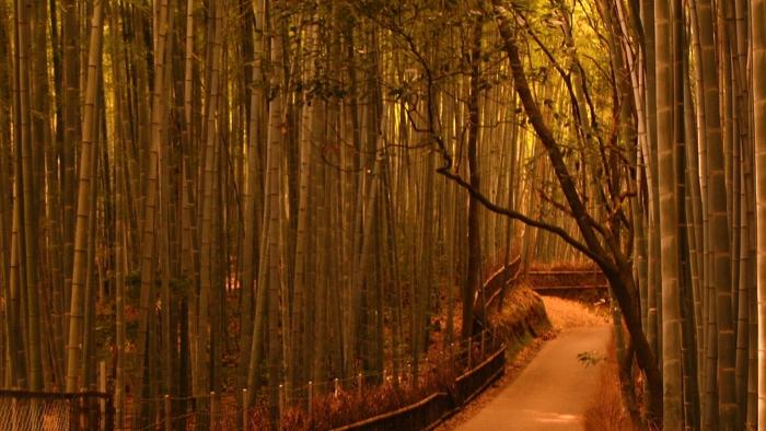 岚山的竹林深处,别有一番秋意的景色...