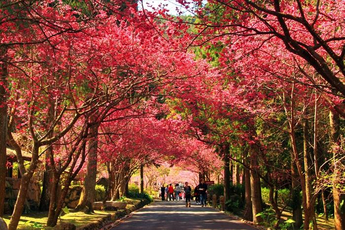 国内外游客都喜欢到这里来赏花。