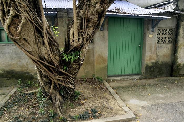 房舍前优美的大树,在久远的日子里一直伴随着眷村。
