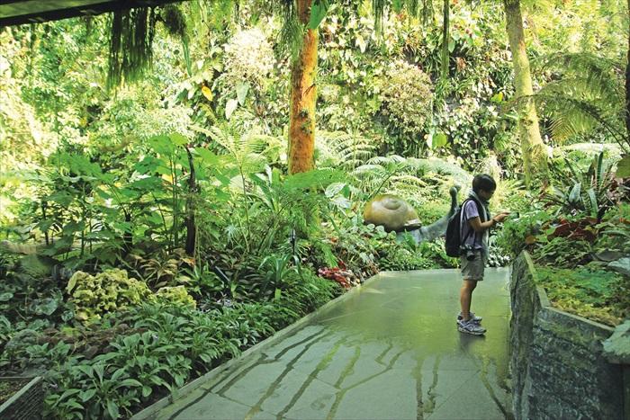 走进云雾林才发现这里内有乾坤,有谁想到里面隐藏着一个热带雨林?