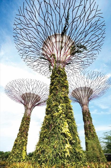 擎天大树整个框架外面被绿色植物包围。