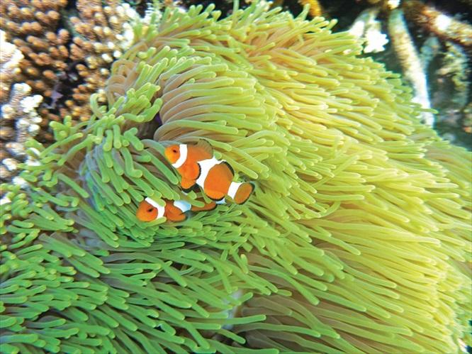 在波光粼粼的蓝色水域里浮浅,观看小丑鱼的游泳英姿。