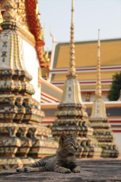 在卧佛寺巧遇小猫。