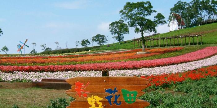 大溪花海农场以缤纷大片的花海闻名。