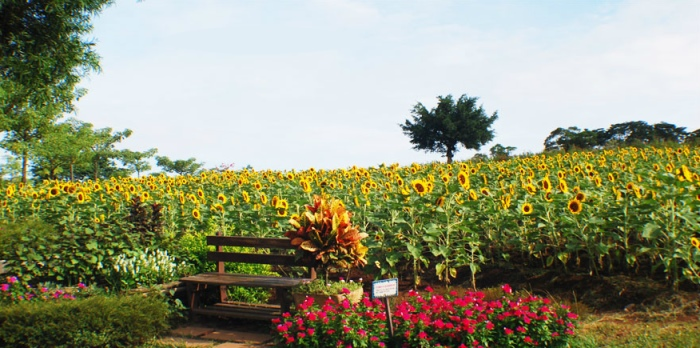 不同的季节花卉主角也有异。