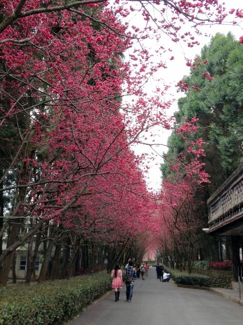 桃红色长廊,走起来别具诗意。