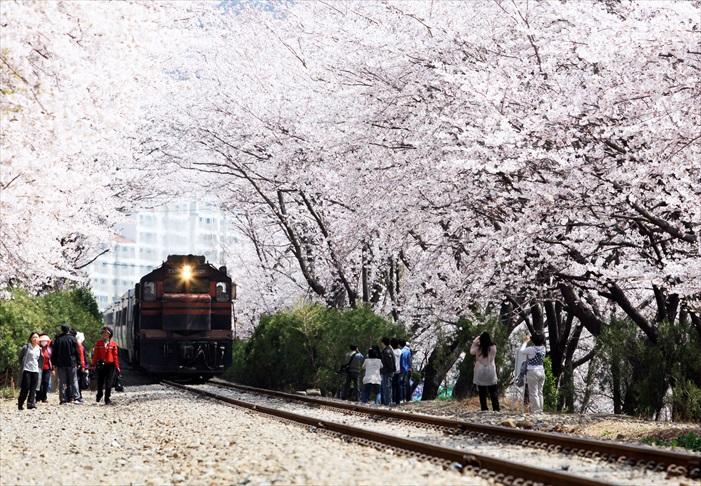 其中,樱花和铁道相伴的画面备受青睐。