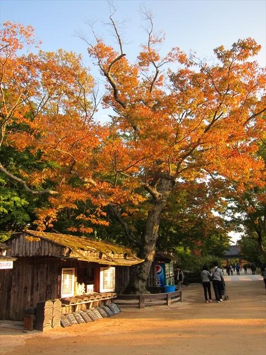 秋季是游览古迹的最佳时节,这是因为这时候红叶和冷暖适中的气温为其加了不少分。