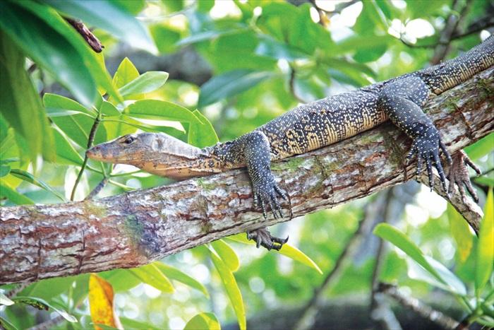 还有隐藏着四脚蛇呢!