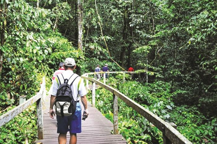 森林里有栈道,主要是为了保护植物不被游客践踏。
