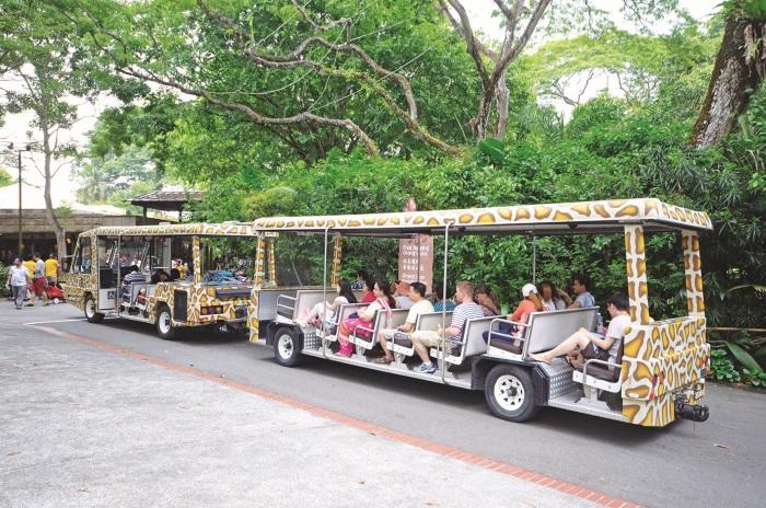 体验新加坡动物园内其中一个最好的方式就是乘坐游览车,车厢内设有资讯丰富的英语语音讲解。