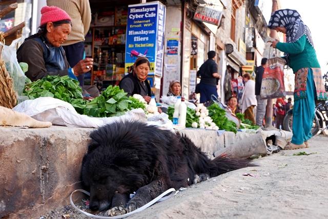 在列城市集随地睡觉的狗儿